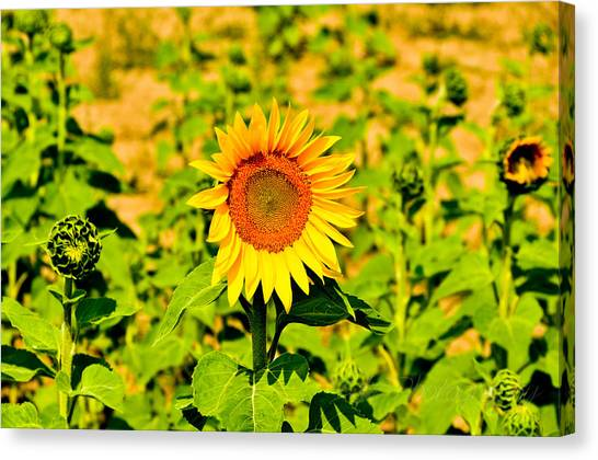 Sunny Canvas Print by BandC  Photography