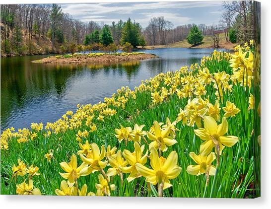 Daffodils Canvas Print - Sunny Daffodil by Bill Wakeley