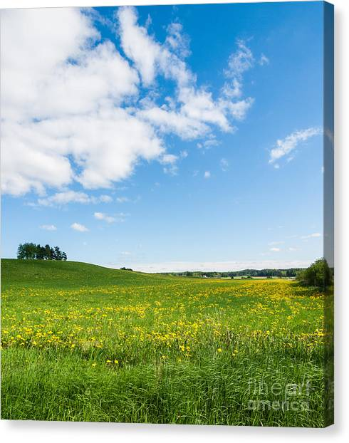 Sunny Day At The Fields Of Gold Canvas Print