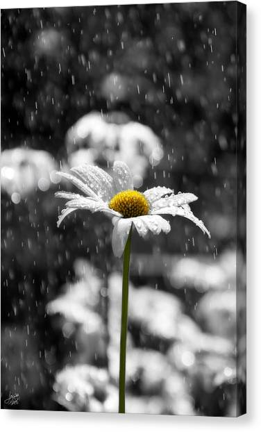 Sunny Disposition Despite Showers Canvas Print