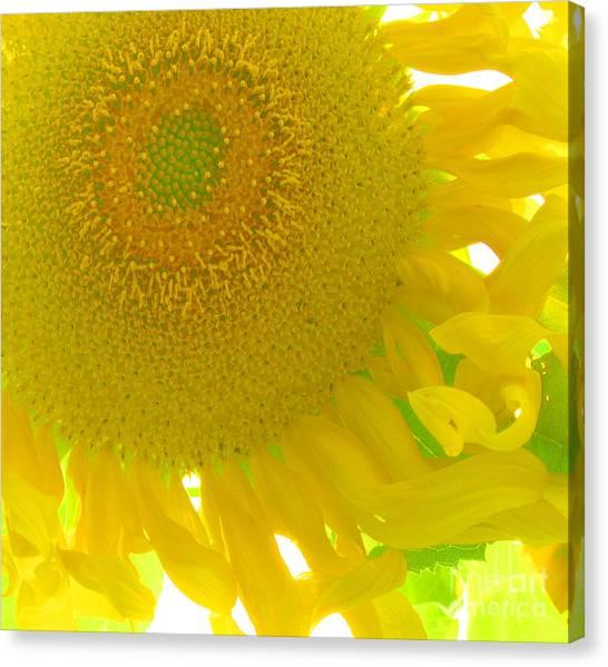 Sunny Flower Canvas Print by Marcia Nichols