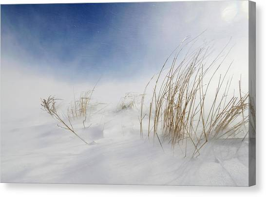 Winter Storm Canvas Print - Sunny Snowstorm by Carlo Tonti