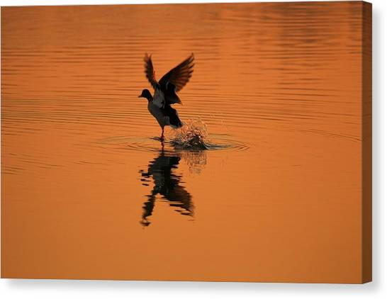Wildlife Canvas Print - Sunrise And Go by Youli Xia