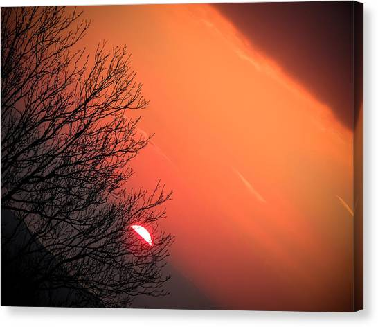 Sunrise And Hibernating Tree Canvas Print