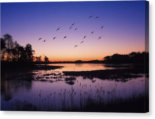 Geese Canvas Print - Sunrise At Assateague - Wetlands - Silhouette  by SharaLee Art