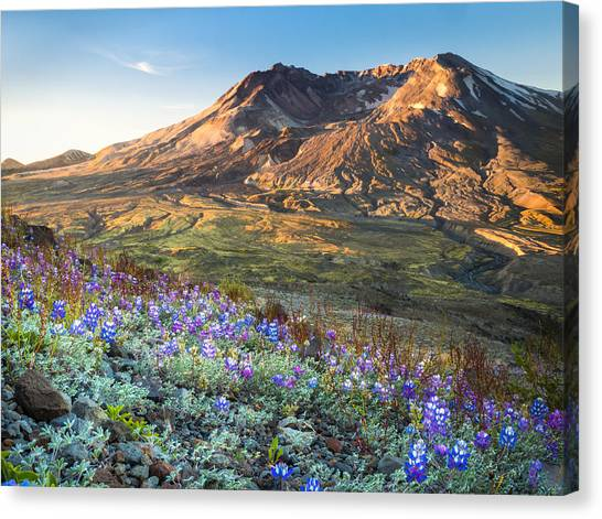 Sunrise At Mount St. Helens Canvas Print