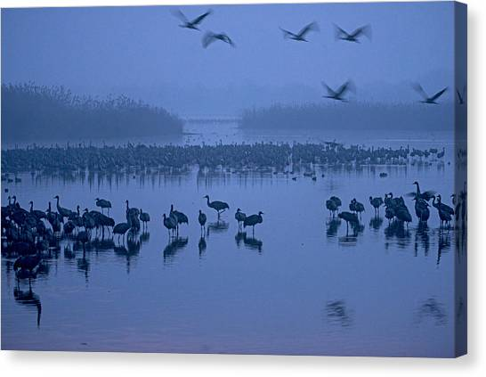 Sunrise Over The Hula Valley Israel 4 Canvas Print