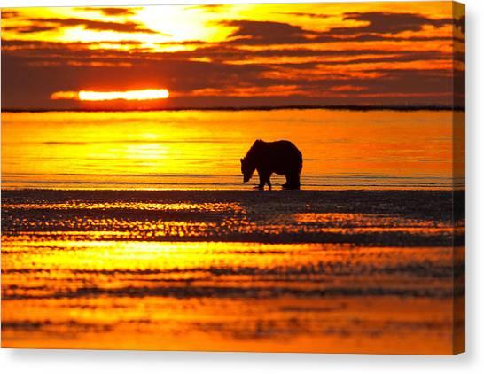 Sunrise Bear Canvas Print
