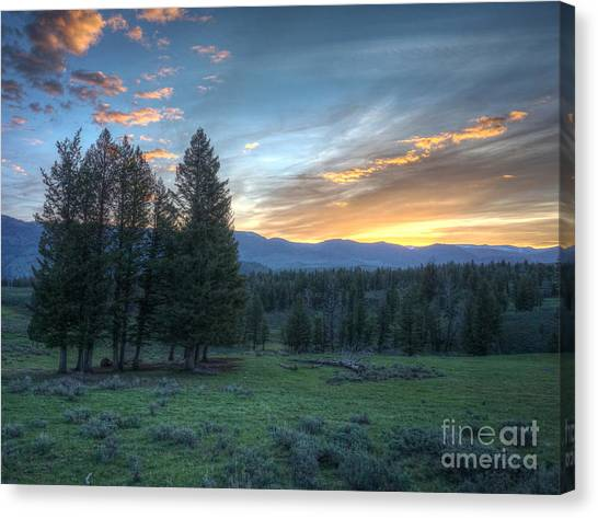 Sunrise Behind Pine Trees In Yellowstone Canvas Print