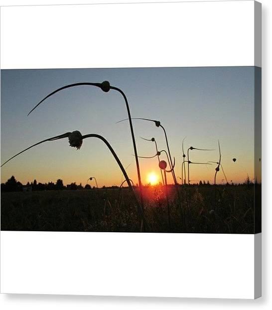 Sunrise Horizon Canvas Print - #sunrise  #daybreak #silhouette by Melissa  Beck