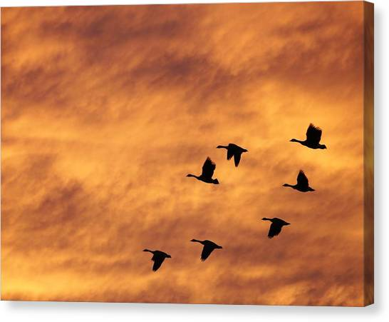 Sunrise Flight 2 Canvas Print