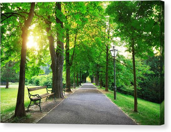 Sunrise In A Green Park Canvas Print by Borchee