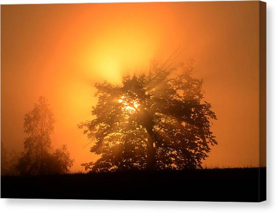Sunrise In Fog Canvas Print