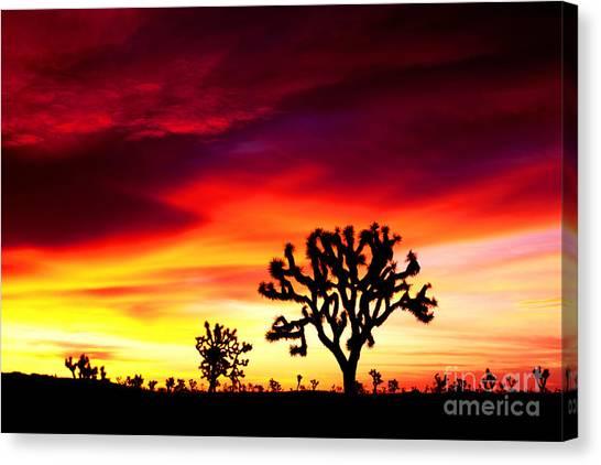 Sunrise In Joshua Tree Nat'l Park Canvas Print