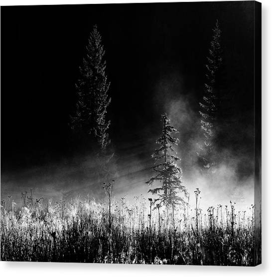 Fir Trees Canvas Print - Sunrise In The Forest by Julien Oncete