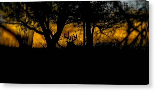 Sunrise In The Timber Canvas Print