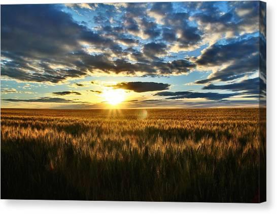 Sunrise On The Wheat Field Canvas Print