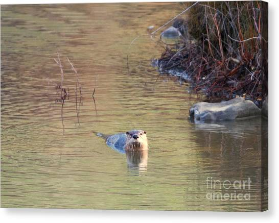 Otters Canvas Print - Sunrise Otter by Mike Dawson