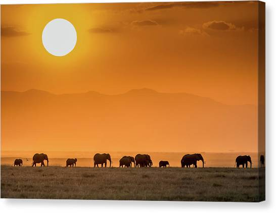 Sunrise Over Amboseli Canvas Print by Jeffrey C. Sink