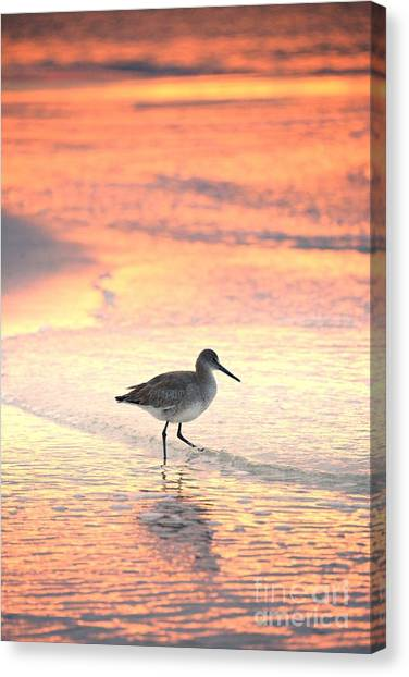 Sunrise Shorebird Canvas Print