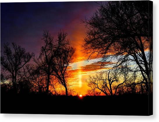 Sunrise Through The Cottonwoods Canvas Print
