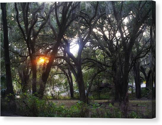 Sunrise Through The Oaks Canvas Print