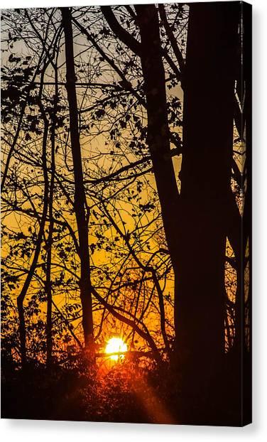 Sunrise Through Trees Canvas Print