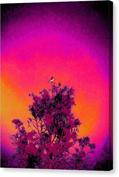 Sunrise To Sunset Nature Is Beautiful Canvas Print