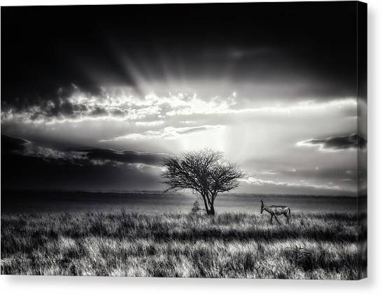 Sunrise With Hartebeest Canvas Print by Piet Flour