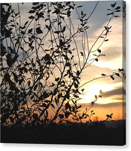 Canvas Print featuring the photograph Sunset And Nature's Silhouette by Candice Trimble