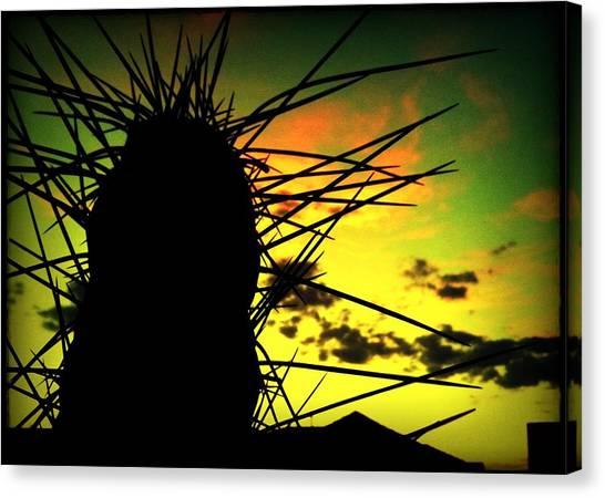 Sunset Cactus Canvas Print