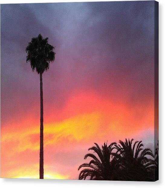 Palm Trees Sunsets Canvas Print - Sunset California by CML Brown