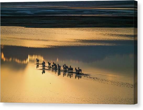 Kenyan Canvas Print - Sunset Crossing by John Fan
