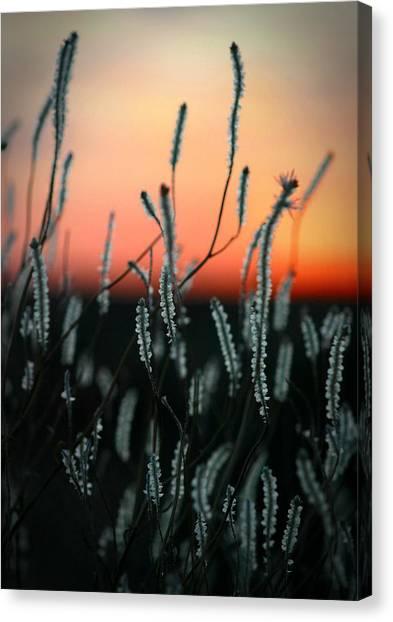 Sunset Desert Canvas Print