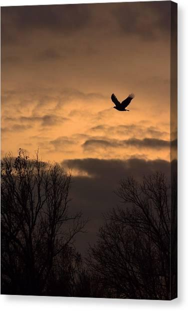 Sunset Eagle Canvas Print