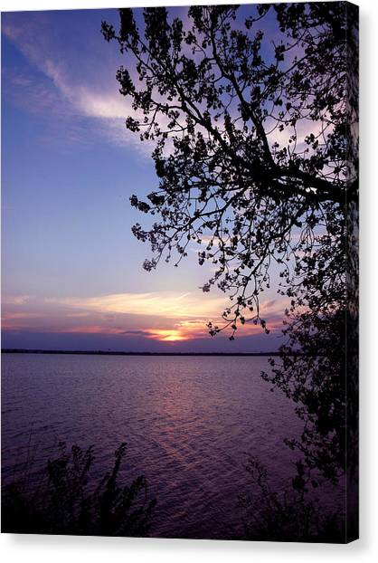 Sunset From The Trees Canvas Print by Virginia Forbes
