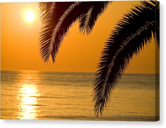 Sunset Golden Color With Palm Canvas Print