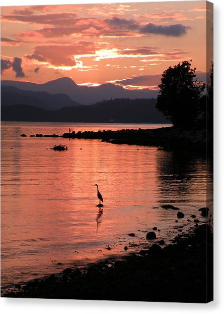 Sunset Heron Canvas Print