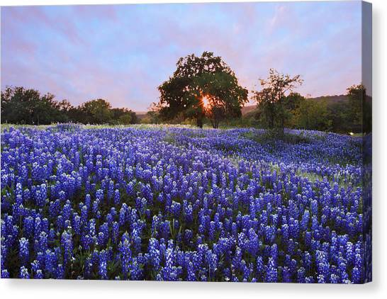 Sunset In Bluebonnet Field Canvas Print
