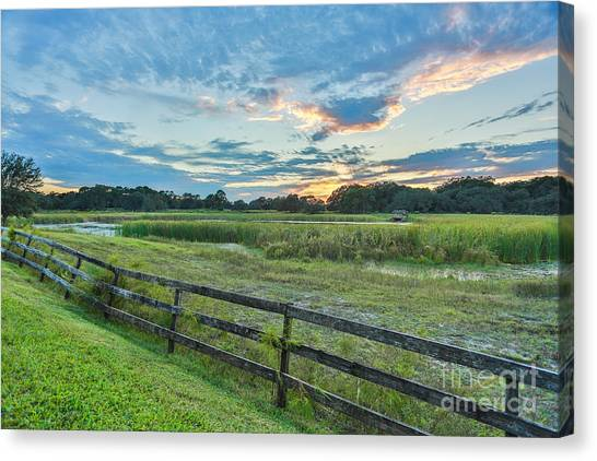 Sunset In Green Field Canvas Print by Mina Isaac