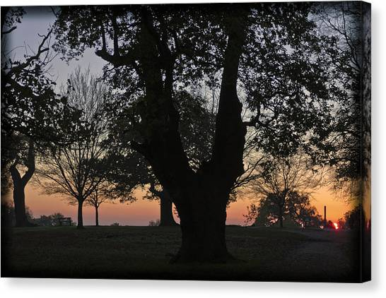 Sunset In Richmond Park Canvas Print