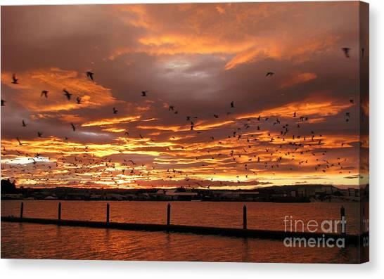 Sunset In Tauranga New Zealand Canvas Print