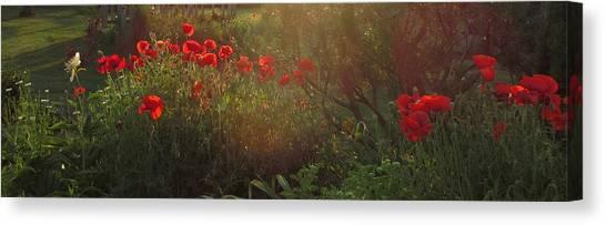 Sunset In The Poppy Garden Canvas Print