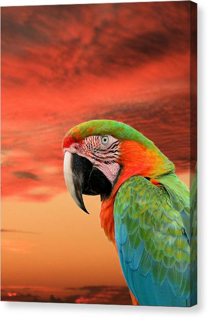 Sunset In The Tropics Canvas Print