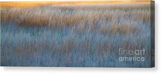 Sunset Marsh In Blue And Gold Canvas Print