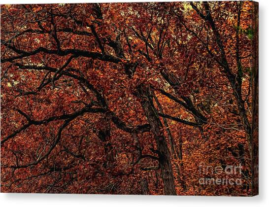 Sunset Oaks 2 Canvas Print