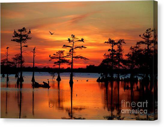 Florida Swamp Canvas Print - Sunset On The Bayou by Carey Chen
