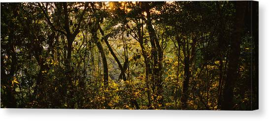 Monteverde Canvas Print - Sunset Over A Forest, Monteverde Cloud by Panoramic Images