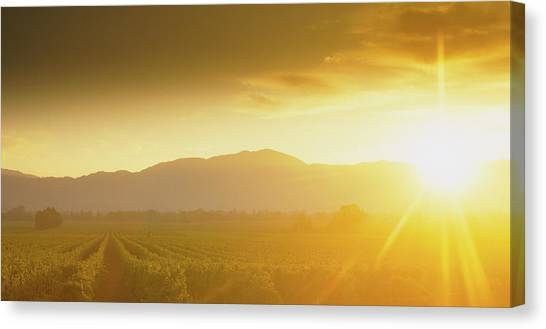 Vineyard In Napa Canvas Print - Sunset Over Vineyard, Napa Valley by Panoramic Images