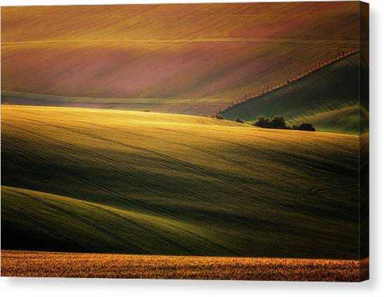 Shrub Canvas Print - Sunset Palette by Marek Boguszak